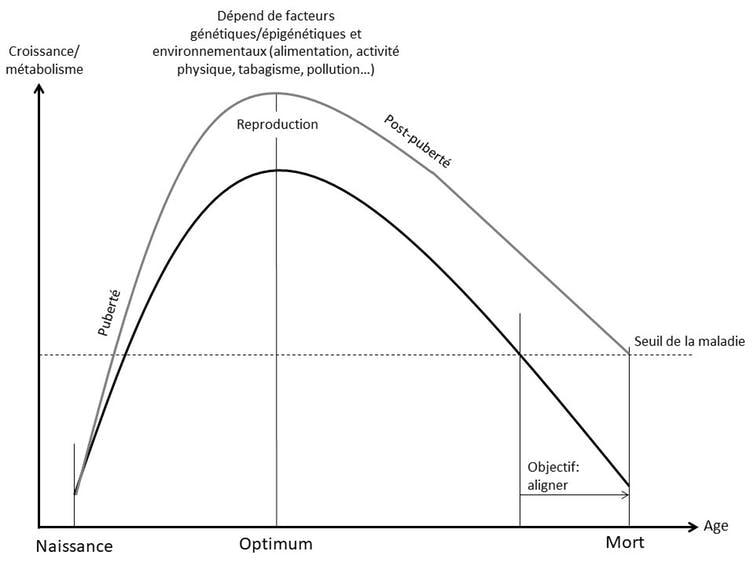 Le système classique de courbe concave pour les principales fonctions physiologiques ubiquitaires humaines.