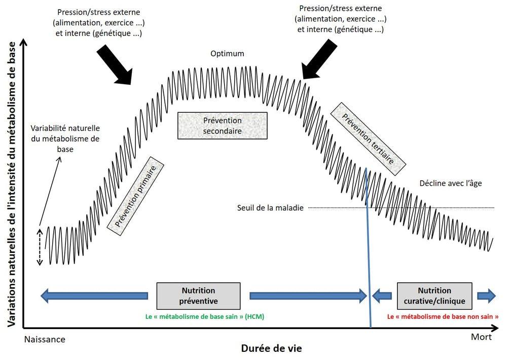 Une représentation schématique de l'évolution du «métabolisme de base sain» au cours de la vie.
